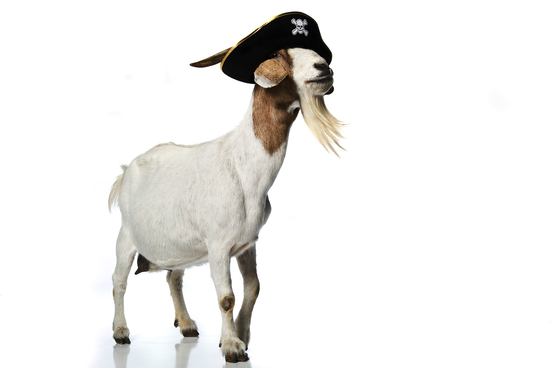 Pirate_Goat